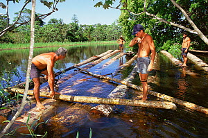 Making a raft to transport timber logged in Mamiraua ecological station, Amazonas, Brazil - Luiz Claudio Marigo