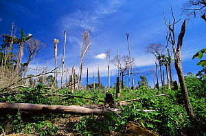 Amazon upland rainforest destroyed by fire for agriculture, Para, Brazil - Luiz Claudio Marigo