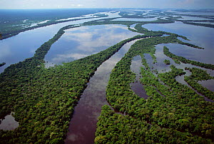 Aerial view of Igapo flooded rainforest, River Negro, Anavilhanas Ecol Stn, Brazil  -  Luiz Claudio Marigo