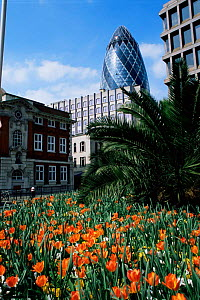 The Gerkin building in the city of London, UK. - Rod Williams