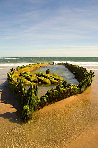 Ancient ship wreck on beach at low tide, Holy Island, UK.  -  Roger Powell
