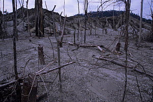 Forest destruction. Burnt for gravel excavation. Sultanate of Brunei. - Daniel Gomez