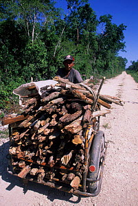 Old local man wheeling firewood through Sian Ka'an Biosphere Reserve, Mexico. - Daniel Gomez