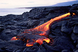 Hot pahoehoe lava flowing from Kilauea Volcano onto Lae'apuki Bench, Hawaii Volcanoes National Park  -  Doug Perrine