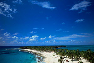 Palm trees growing on Half Moon Cay, Belize  -  Doug Perrine