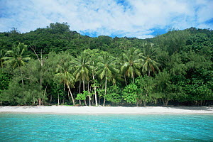 View from sea of beach and fringing forest and palm trees, Rock Islands, Palau, Micronesia  -  Doug Perrine