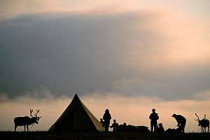 Silhouette of ecotourist Reindeer trek camp site with Saami, Lapland, Sweden. - Staffan Widstrand