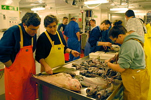 Researchers sorting a benthic deep sea trawl sample, rat tails etc, in laboratory - David Shale