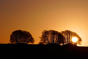 Sunrise behind trees, Avebury, Wiltshire near Avebury Stone Circle, UK. - Michael Hutchinson