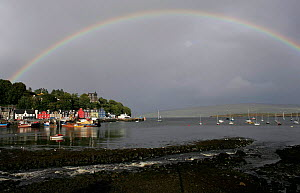 Rainbow over Tobermory harbour and colourful houses of main street, Tobermory, Isle of Mull, Scotland  -  Michael Hutchinson