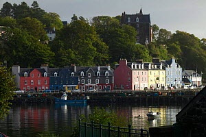 Colourful harbour cottages in Tobermory from across the bay, Isle of Mull, Scotland, UK.  -  Jason Smalley