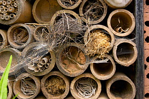 Canes laid down in a pile and filled with various materials  to encourage insects in a garden, UK.  -  Jason Smalley
