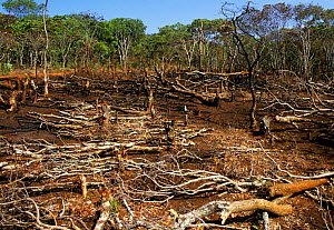 Deforestation by fire and felling for agriculture, Zambia - Peter Blackwell