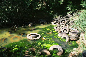 Tyres dumped in quarry pond, Treflach, Shropshire, UK.  -  Will Watson