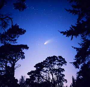 Comet Hale Bopp seen from Southern England, February 1997  -  Kim Taylor