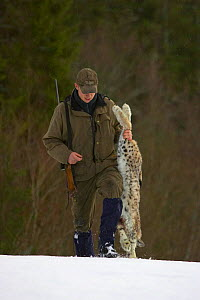 Norwegian hunter with recently shot Lynx as part of government quota system, Nord-Trondelag, Norway  -  Pete Cairns