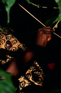 Hunter using bow and arrow, wearing leopard mask, South Kivu, Democratic Republic of Congo. The masks stimulate alarm calls from primates, helping to pinpoint their location so they can be shot with p...  -  Karl Ammann