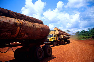 Tropical rainforest timber transported on logging trucks to the local seaport. Drivers are paid per trip and therefore have an incentive to ignore traffic and safety rules.  -  Karl Ammann