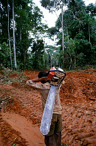 Logger with chainsaw in clear-cut rainforest, Central Africa. Local communities suffer from the loss of their natural heritage, yet they are often employed as labourers, thereby damaging their own pro... - Karl Ammann