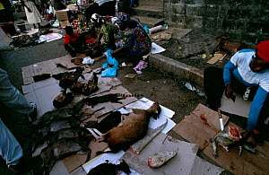 Bushmeat for sale in urban market, Central Africa. Wild meat, often from endangered species, is sold in every city throughout West and Central Africa often at higher prices than domestic meat. Commerc...  -  Karl Ammann