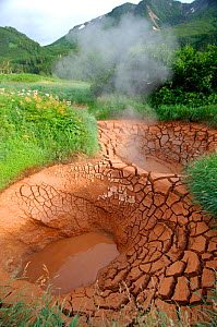 Boiling red clay mud pots with steam, caused by underground volcanic activity, Valley of the Geysers, Kronotsky Zapovednik Reserve, Russia.  -  Igor Shpilenok