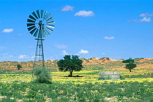 Waterhole with windpump and flowers in bloom after rainstorm, Kgalagadi NP, Kalahari desert, South Africa  -  Philippe Clement