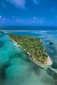 Aerial view of coastal island covered with coconut palms, San Blas islands, Panama, Caribbean Sea  -  Michael Pitts