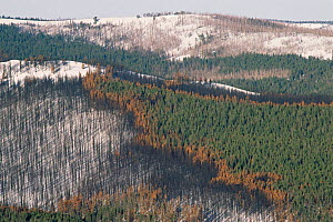 Fire burn mosiac created by forest fire in Lodgepole pine forest, Yellowstone NP, Wyoming, USA. 1989  -  Steven Fuller