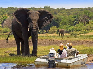 Tourists watching African elephants {Loxodonta africana} from boat on the Chobe River, Chobe NP, Botswana, Africa - Tony Heald