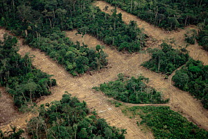 Aerial view over the rainforest showing transect deforestation, Manaus, Brazil, South America  -  Staffan Widstrand