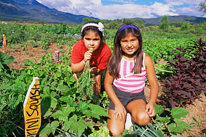 Native American children harvesting vegetables, Taos Pueblo, New Mexico, USA  -  John Cancalosi