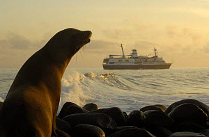 Galapagos sea lion (Zalophus wollebaeki) & M/V Santa Cruz, Espa�ola / Hood Is, Galapagos  2006  -  Pete Oxford