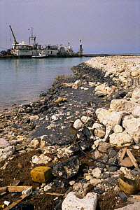 Oil pollution on rocky shore from the Iran/Iraq War, 1980-1988, Bahrian  -  Francis Abbott