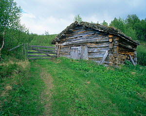Old barn used to shelter cattle in the summer, Trondelag, Norway  -  Bengt Lundberg