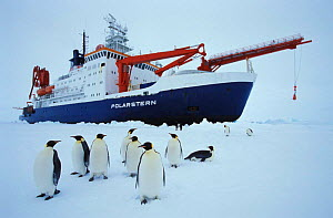 Research icebreaker ship, Polarstern, with Emperor penguins (Aptenodytes forsteri) Weddell Sea, Antarctica FOR SALE ONLY IN UK (Editorial use only)  -  Ingo Arndt