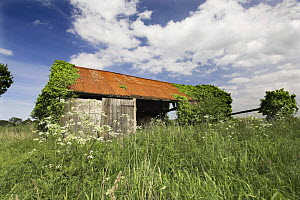Derelict farm building, colonised by plants, Norfolk, UK - Gary K. Smith