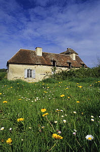 Old country building with Dandelions (Taraxacum sp) and daisies in foreground, Forez, France  -  Jean E. Roche