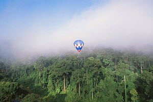 The 'Cinebulle' hot air balloon flying above early morning mist canopy of lowland Dipterocarp rainforest, Danum valley, Sabah, Borneo, Malaysia, 2002  -  James Aldred