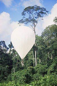Scientist floating in the 'Bubble', helium filled dirigible, for research on canopy of lowland Dipterocarp rainforest, Danum valley, Sabah, Borneo, Malaysia, 2005  -  James Aldred