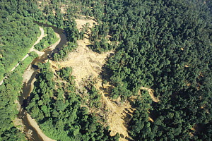 Aerial view of deforestation of lowland Dipterocarp rainforest being clear felled by Tayasan Sabah (Ministry of Forestry) for timber, Sabah, Borneo, Malaysia, 2005  -  James Aldred