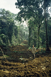 Deforestaion of primary rainforest cleared during selective logging forestry operations, Equatorial Guinea, Central Africa 1999  -  James Aldred