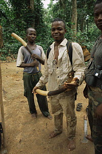 Members of the Wildlife Conservation Society anti-poaching patrol team with confiscated African forest elephant tusks, Dzanga-Sanga Bai, Bayanga, Central African Republic, 2003  -  James Aldred