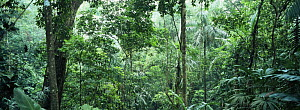 Thick primary neo-tropical rainforest, Llano Bonito, Darien Province, Panama, Central America 2006  -  James Aldred