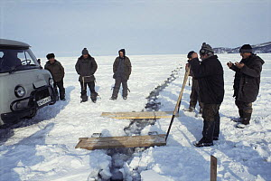 Local men preparing planks to use as bridge across cracking ice plate, 1 mile out from shoreline of Lake Baikal, world's deepest and oldest (and largest by volume) freshwater lake, Siberia, Russia BB...  -  Mark Brownlow