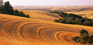 Stubble fields after the wheat harvest, Palouse, Steptoe Butt State Park, Washington, USA  -  Jack Dykinga