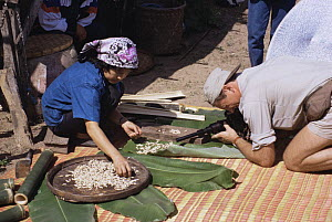 Camerman Rod Clarke filming Bamboo worms for BBC 'Private Life of Plants', Chang Mai, Thailand, November 1994  -  Rupert Barrington