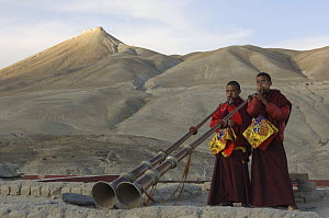 Two Nepalese monks playing the 'Lawa' (long trumpet) on the rooftop of the Chhode Gompa, at the end of the last ceremony of 'Duk chu' festival, Lo-Manthang, Upper Mustang, Nepal  -  Bernard Castelein