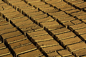 Wet bricks  laid out in sun to dry. Antananarivo city, MADAGASCAR  -  Pete Oxford