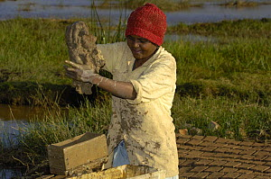 Woman making bricks from mud. They will then be sun-dried before being stacked and fired. Antananarivo city. Highlands of MADAGASCAR 2005  -  Pete Oxford