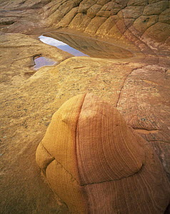Petrified sand dunes with eroded sandstone bands and rain-filled pot holes, Paria Canyon-Vermilion Cliffs Wilderness, Arizona, USA  -  Jack Dykinga